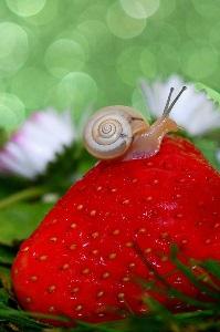 Petit escargot... |