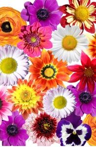 La ronde des fleurs |